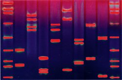 DNA-Bilder